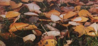 Jesienne liście wspomnień